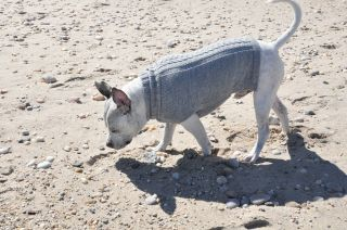 "Alpaca Wool Hand Made ""Cable"" Chilly Weather Dog Sweater Coat Jacket"
