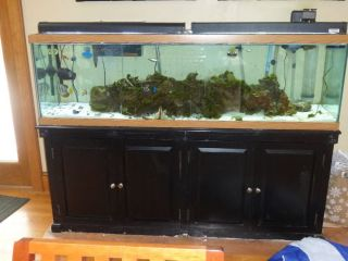 135 Gallon Salt Water Fish Tank with Fish Live Rock and Custom Stand