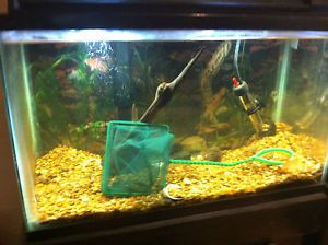 10 Gallon Tank with Wooden Shelf Stand Gravel Filter and Decorations