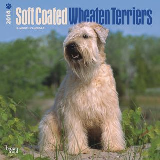 Soft Coated Wheaten Terriers 2014 Wall Calendar 1465013199