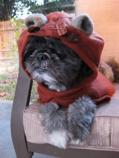 Handmade Star Wars Ewok Pet Dog Costume