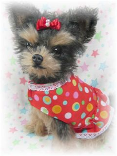 OOAK Mohair Yorkie Yorkshire Terrier Puppy Dog w Dress