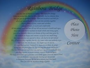 Rainbow Bridge Memorial Poem in Loving Memory of Beloved Pet Loss of Dog or Cat