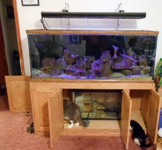 Oceanic 110 Gallon Reef Ready Saltwater Fish Tank Setup