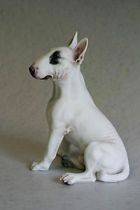 English Bull Terrier White Eye Patch Chapman