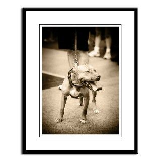 American Pit Bull Terrier Large Framed Print by ilovepitbulls