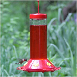 Perky Pet Hummingbird Glass Best Bird Feeder   Bird Feeders